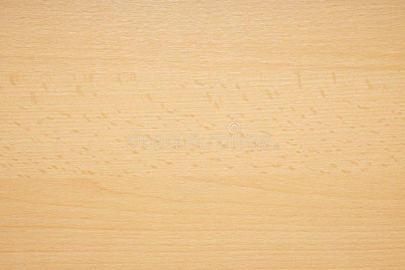 Struttura di legno della Baviera del faggio del primo piano fotografia stock libera da diritti