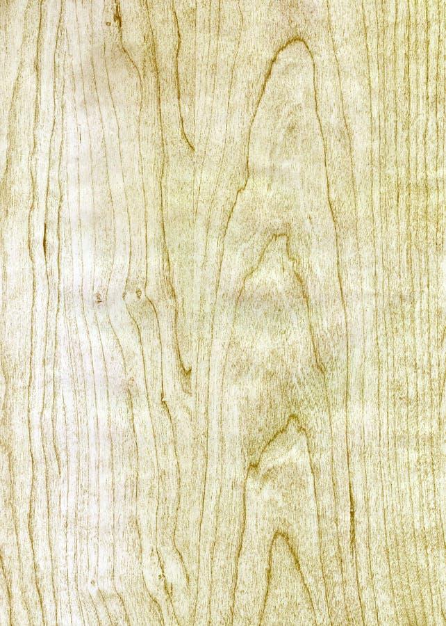 Struttura di legno della betulla immagine stock libera da diritti