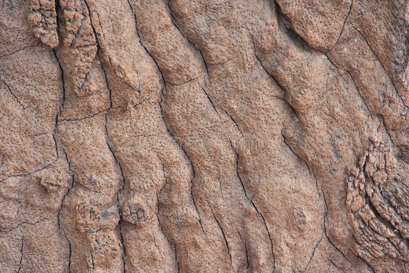 Struttura di legno della crepa immagine stock