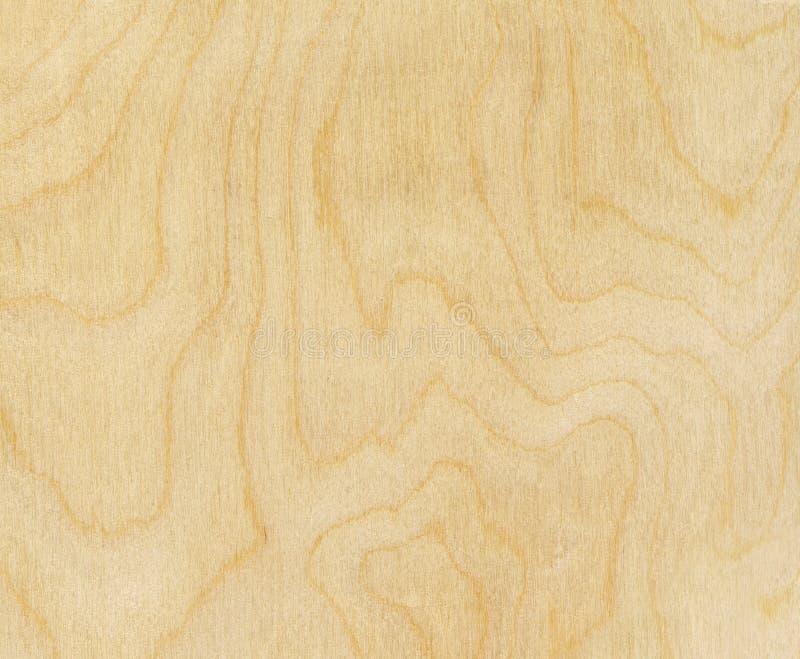 Struttura di legno di betulla fotografia stock libera da diritti