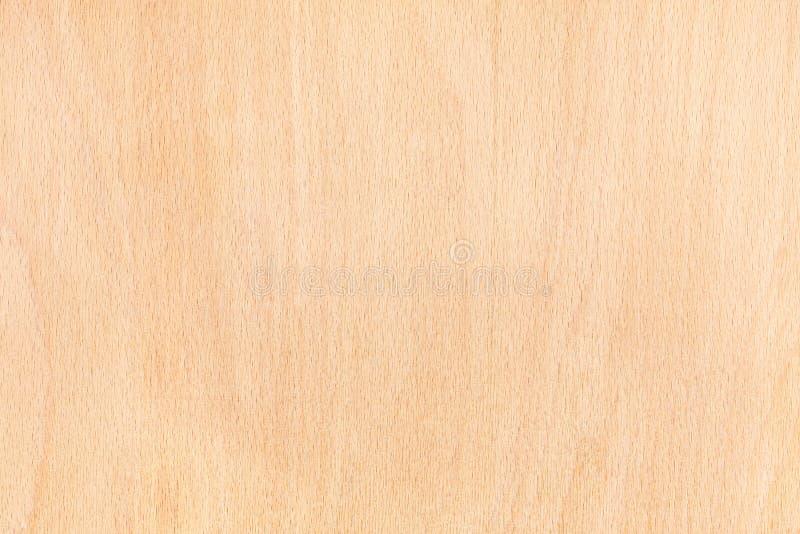 Struttura di legno di faggio immagini stock libere da diritti
