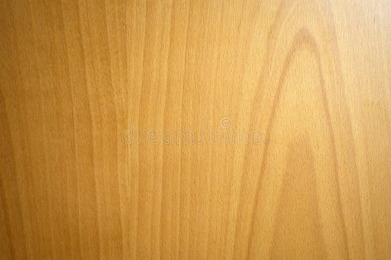 Struttura di legno di faggio fotografie stock libere da diritti