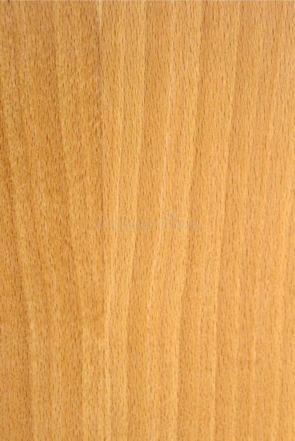 Struttura di legno di faggio fotografia stock libera da diritti