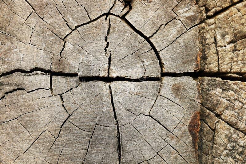 struttura di legno incrinata per il modello e la progettazione fotografia stock libera da diritti