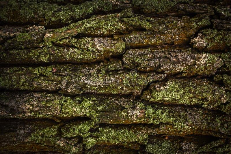 Struttura di legno La corteccia di vecchio albero coperto di muschio immagini stock libere da diritti