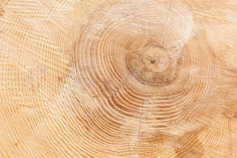 Struttura di legno marrone chiaro e leggermente incrinata immagini stock libere da diritti