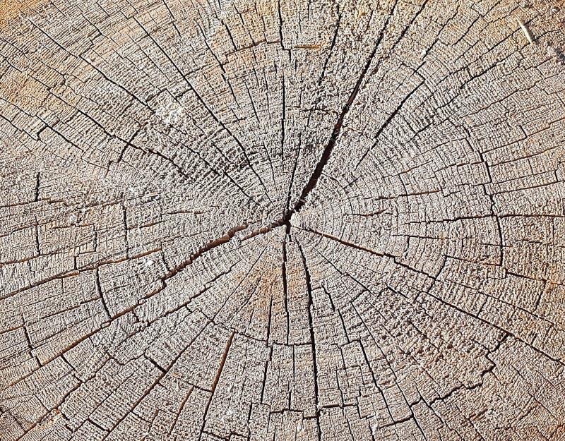 Struttura di legno naturale del ceppo di albero Fondo d'annata con le crepe Fine senza cuciture di struttura su Struttura di legn immagini stock libere da diritti