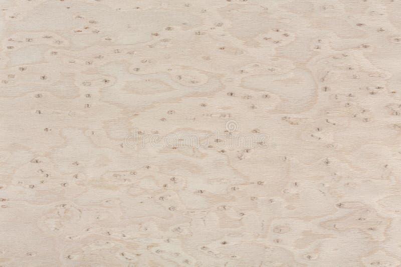 Struttura di legno di progettazione dell'acero Primo piano dello sfondo naturale fotografia stock