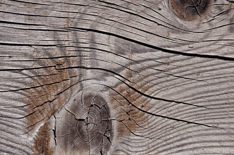 Struttura di legno stagionata grigia che mostra le crepe, i nodi e gli anelli di crescita immagine stock libera da diritti