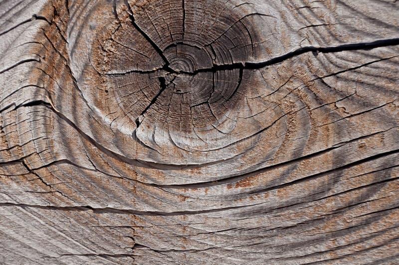 Struttura di legno stagionata grigia che mostra le crepe, i nodi e gli anelli di crescita fotografie stock