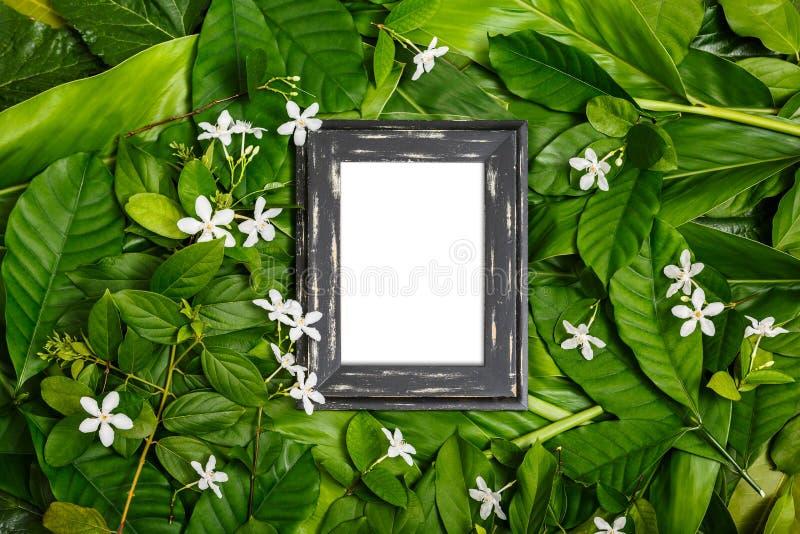 Struttura di legno sulla foglia verde fotografia stock libera da diritti