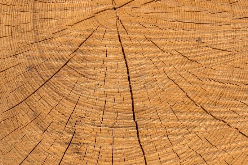 Struttura di legno di un tronco di albero in mezzo alla foresta immagini stock