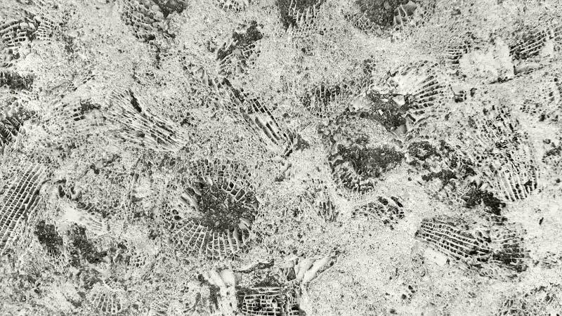 Struttura di pietra con i fossili fotografia stock