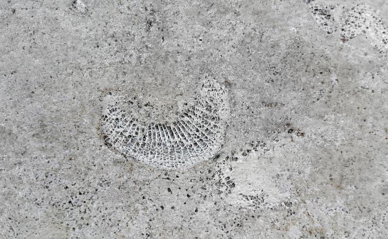Struttura di pietra con i fossili immagine stock