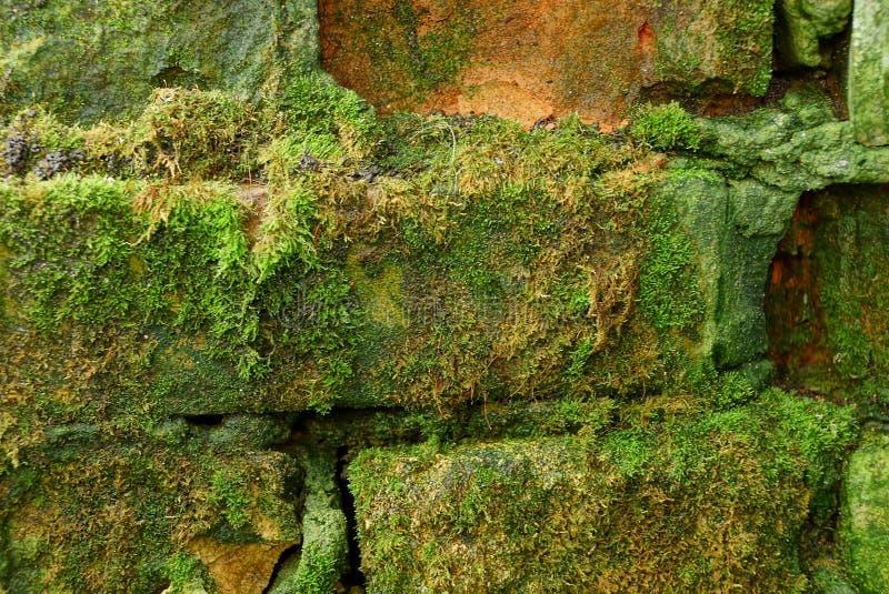 Struttura di pietra di vecchi mattoni coperti di muschio verde fotografie stock