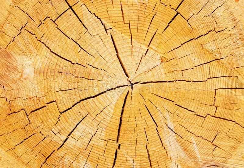 Struttura di un albero su una sezione trasversale fotografia stock