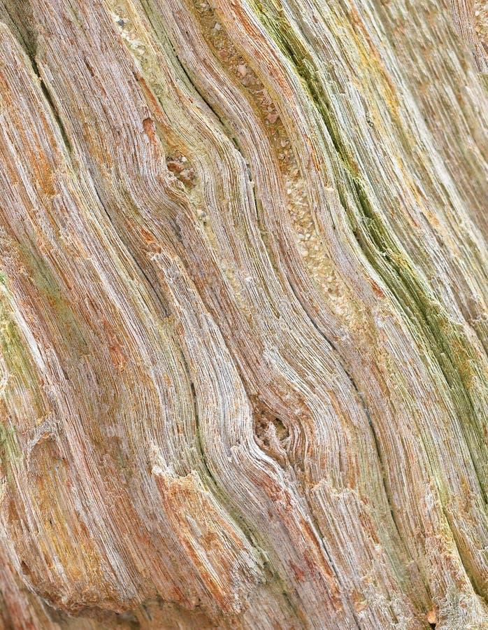 Struttura di uso del legno della corteccia come sfondo naturale fotografie stock
