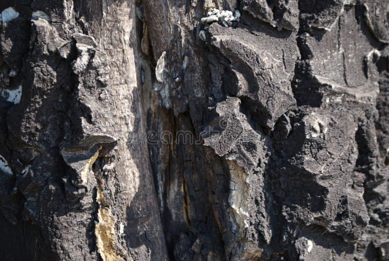 Struttura di uso del legno della corteccia come sfondo naturale immagini stock