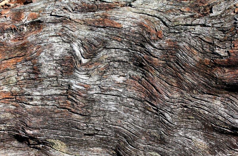 Struttura di uso del legno della corteccia come sfondo naturale immagini stock libere da diritti