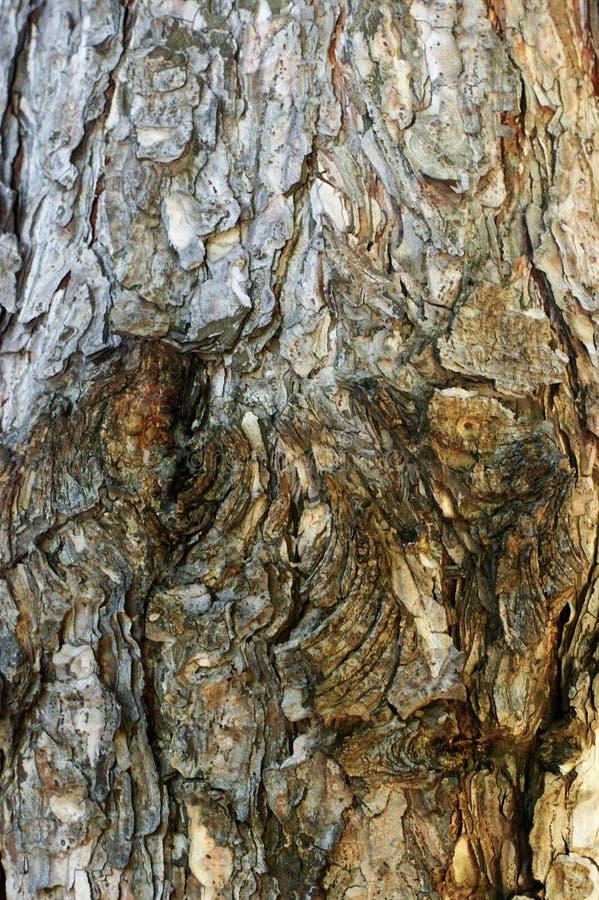 Struttura di uso del legno della corteccia come sfondo naturale fotografie stock libere da diritti