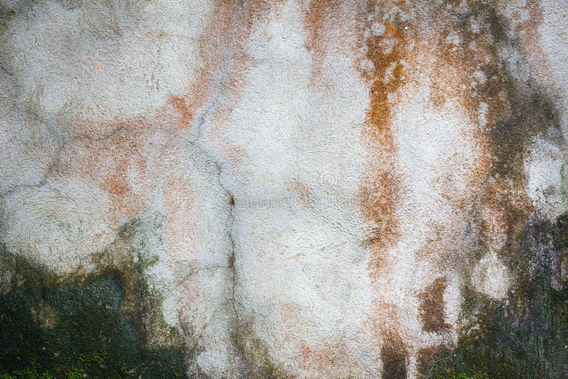 Struttura di vecchia parete concreta di lerciume coperta di muschio come BAC immagine stock libera da diritti