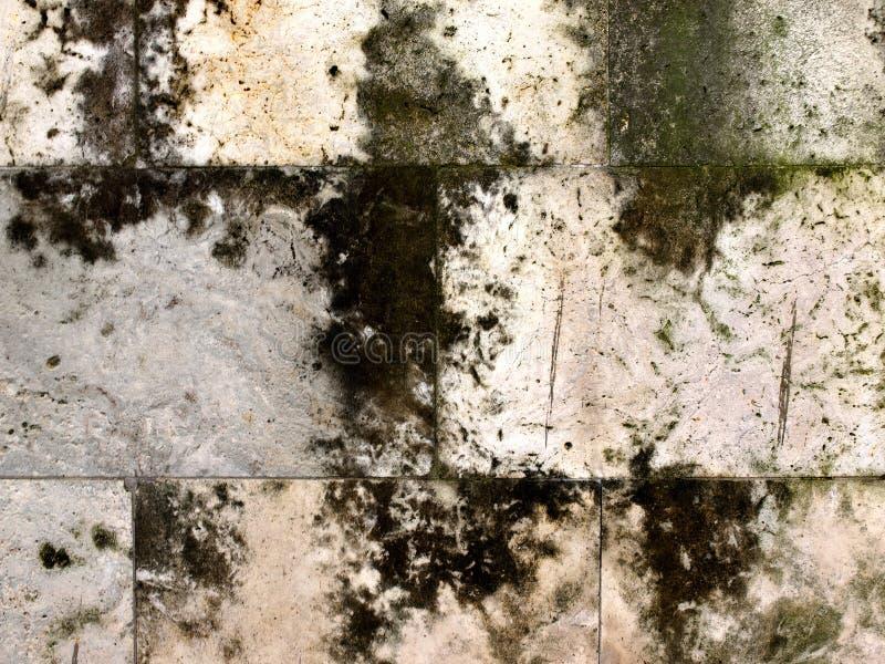 Struttura di vecchia parete concreta di lerciume coperta di muschio mol del lichene fotografia stock