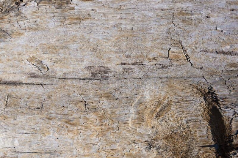 Struttura di vecchio legname galleggiante, lavata su dal mare fotografia stock