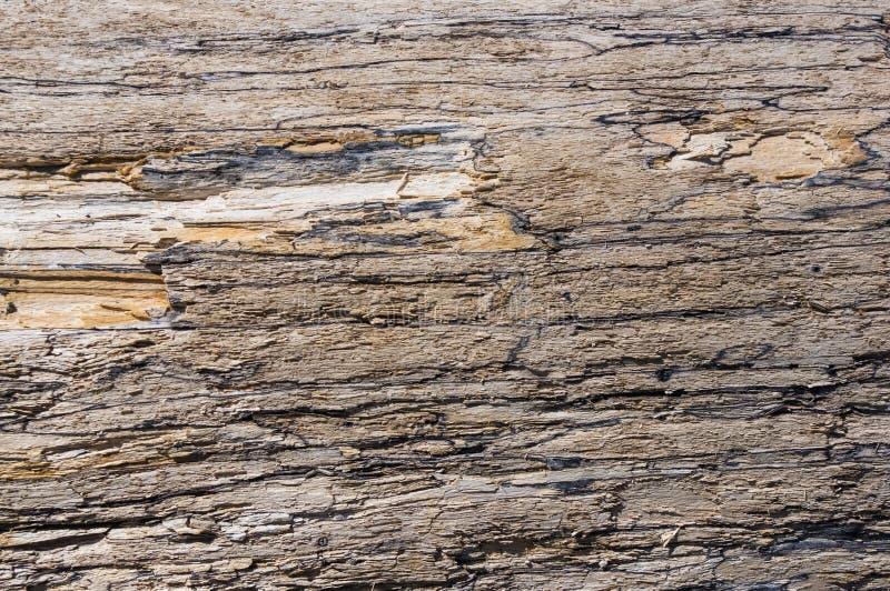 Struttura di vecchio legname galleggiante, lavata su dal mare immagine stock libera da diritti