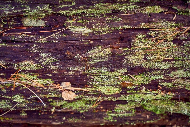 Struttura di vecchio legno nella foresta, coperta di muschio e di vegetazione immagine stock libera da diritti