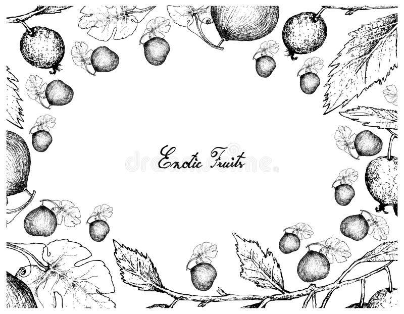 Struttura disegnata a mano del melone di melone d'inverno e dell'albero di ortica europeo royalty illustrazione gratis