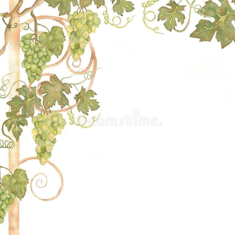 Struttura disegnata a mano dell'uva del bello acquerello nel verde illustrazione di stock
