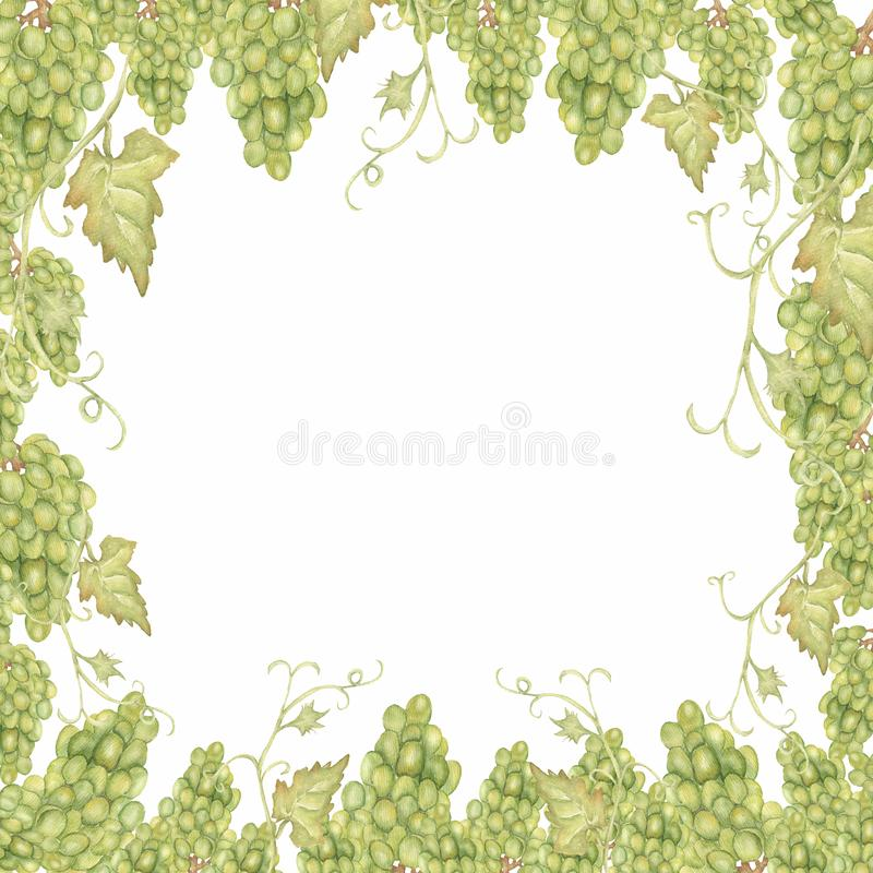 Struttura disegnata a mano dell'uva del bello acquerello nel verde illustrazione vettoriale