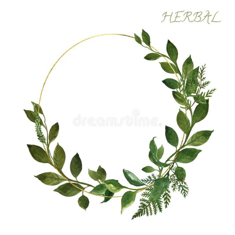 Struttura dorata botanica dell'acquerello con le erbe e le foglie verdi selvagge su fondo bianco Modello di progettazione dell'in royalty illustrazione gratis