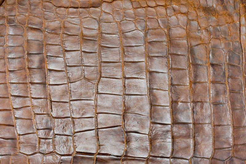 Struttura dorata della pelle del coccodrillo della tinta, primo piano immagini stock