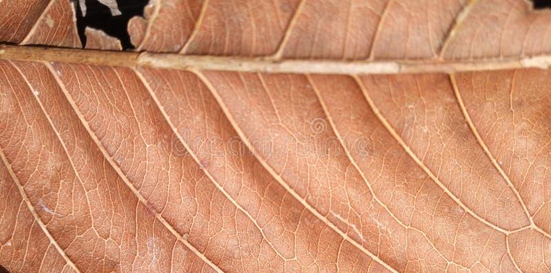 Struttura e fondo della foglia di Brown Macro vista di struttura asciutta della foglia Modello organico e naturale fotografie stock libere da diritti