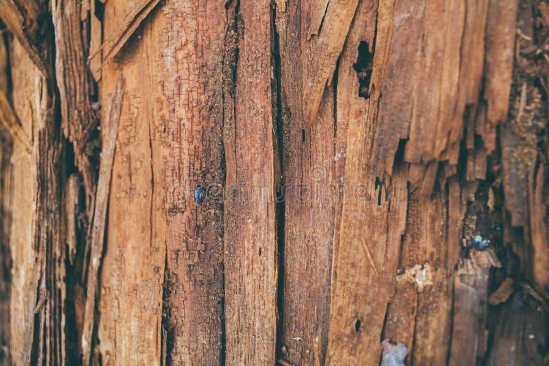 Struttura e fondo di legno scheggiati Vista del primo piano di struttura di legno della scheggia Struttura e fondo astratti per i fotografie stock libere da diritti
