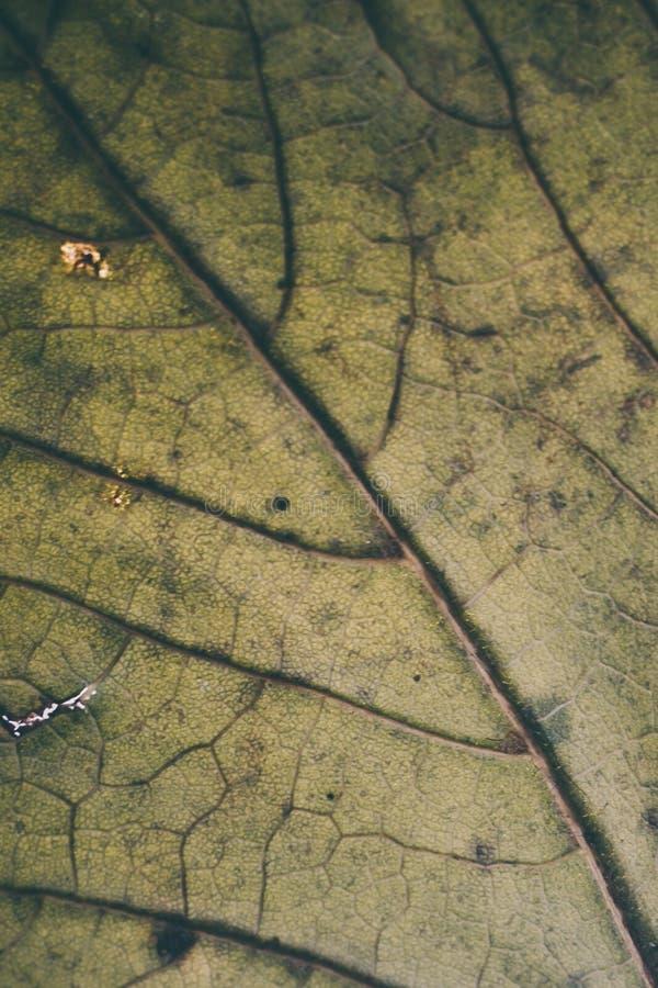 Struttura e fondo verdi della foglia Macro vista di struttura verde della foglia Reticolo organico Struttura & fondo astratti per immagini stock libere da diritti