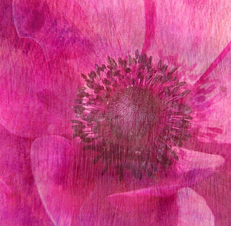 Struttura floreale - colore rosa immagine stock libera da diritti