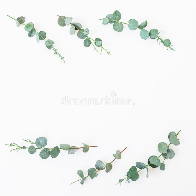 Struttura floreale con le foglie ed i rami dell'eucalyptus su fondo bianco Disposizione piana, vista superiore fotografia stock libera da diritti