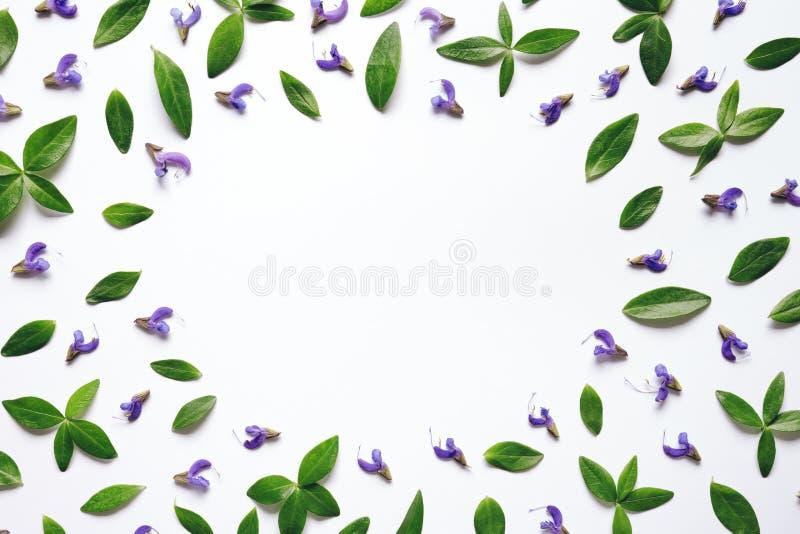 Struttura floreale con le foglie verdi ed i fiori porpora fotografia stock