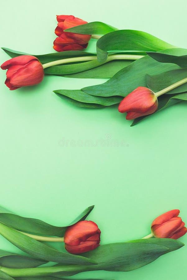 Struttura floreale dei tulipani rossi luminosi sullo spazio verde chiaro della copia di vista superiore del fondo fotografia stock libera da diritti