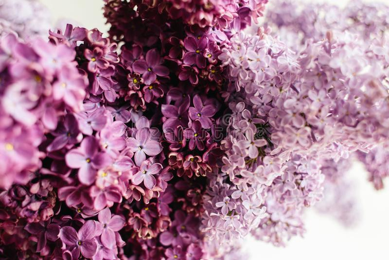 Struttura floreale del lillà su un fondo bianco fotografia stock