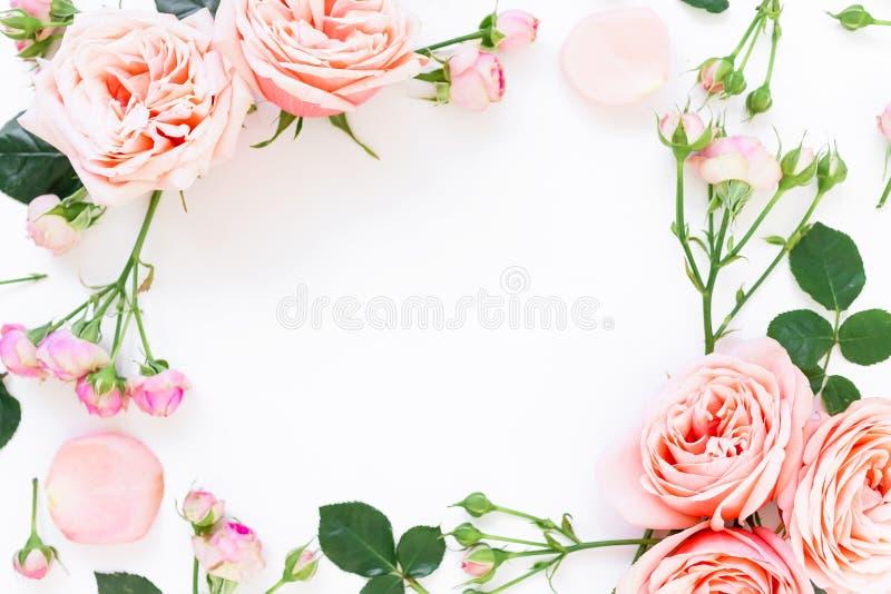 Struttura floreale delle rose, dei germogli e delle foglie della peonia su fondo bianco Disposizione piana, vista superiore Prior immagini stock