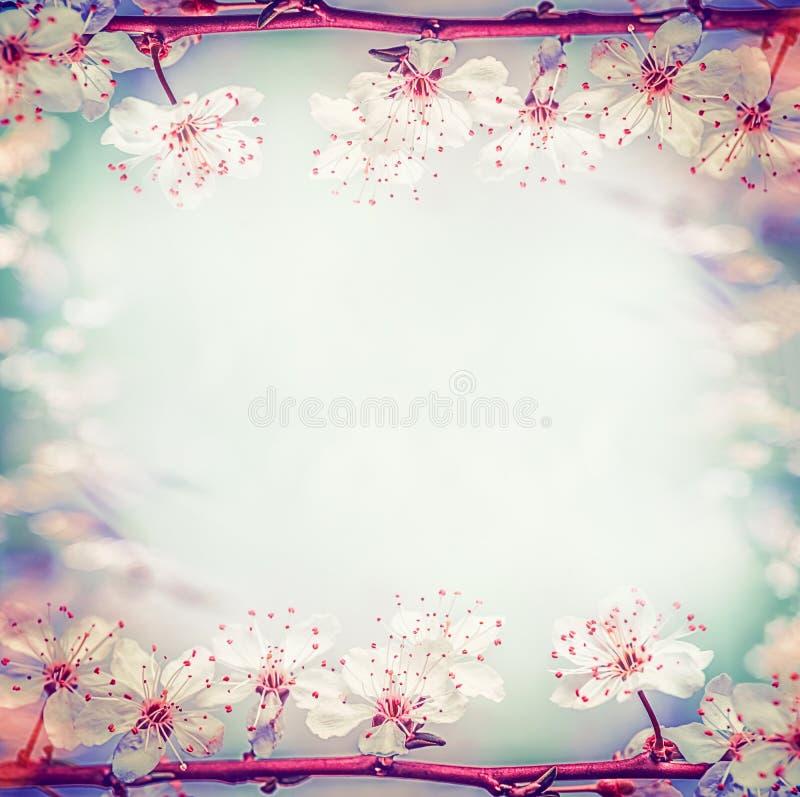 Struttura floreale di primavera con la ciliegia o il fiore graziosa di sakura, a bokeh immagini stock libere da diritti