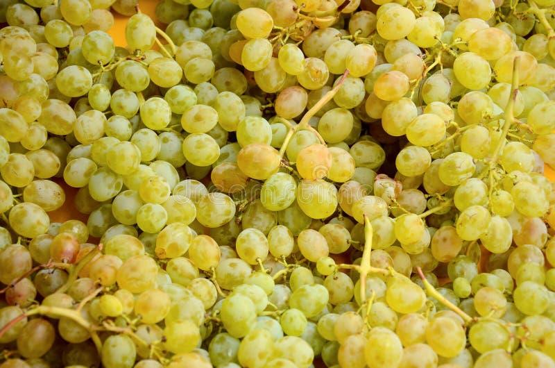 Struttura fresca verde del fondo dell'uva fotografia stock
