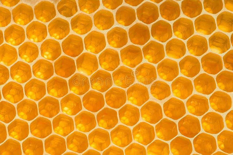 Struttura gialla del fondo del favo Cellule di esagono del miele fotografia stock libera da diritti