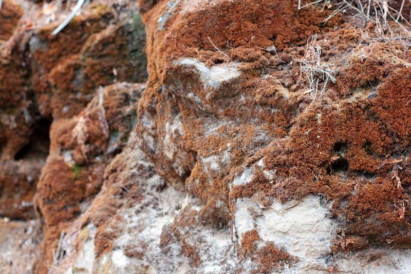 Struttura gialla del muschio sul primo piano di legno del fondo Decorazione arancio della parete del muschio di colore del modell fotografia stock