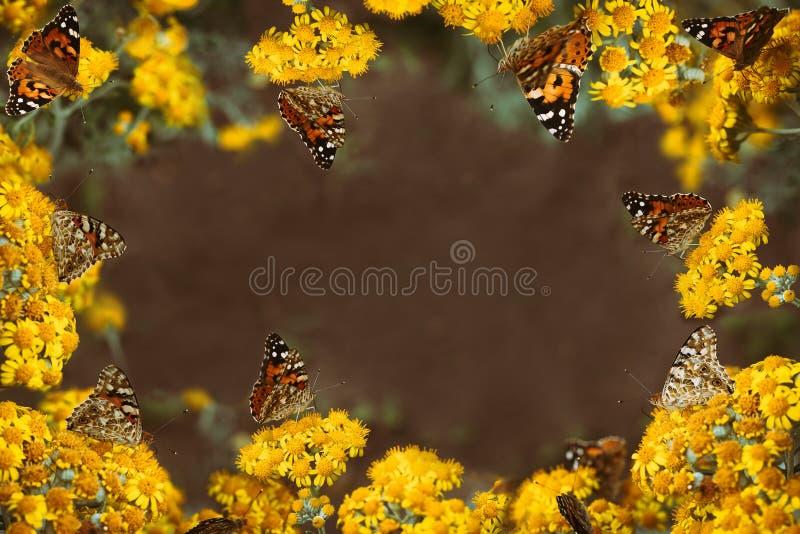 Struttura gialla floreale con molte farfalle in tutto la foto immagine stock libera da diritti