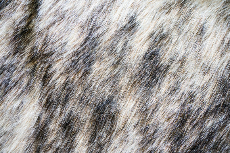 Alfa della pelliccia del visone di struttura della pelliccia immagine stock libera da diritti