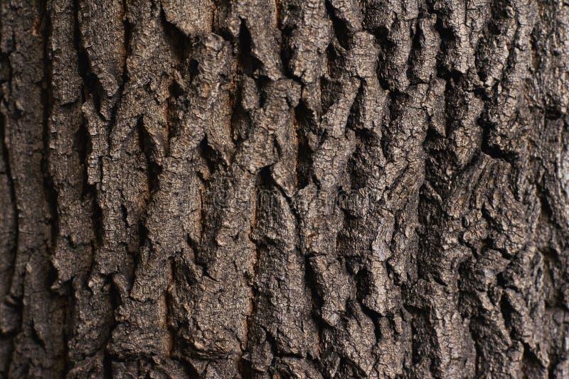 Struttura naturale approssimativa Corteccia di albero di marrone scuro fotografie stock libere da diritti